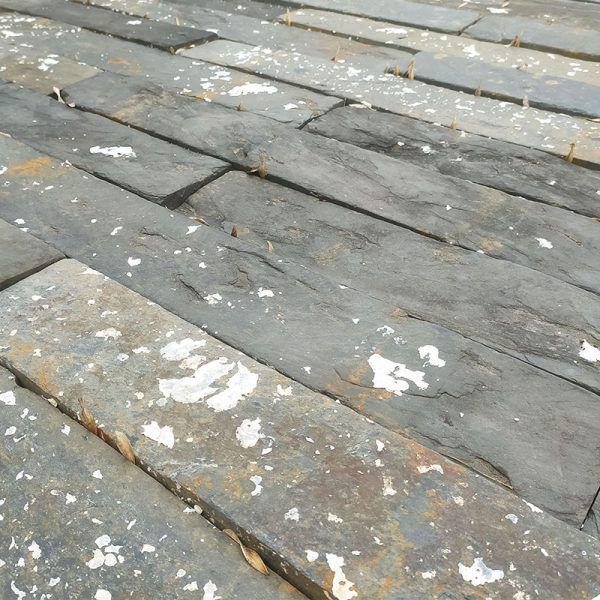 French oyster bed strips